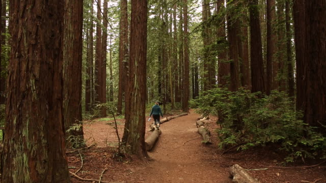 a young women walking in the woods alone with tall redwood trees around her. - oakland california stock videos & royalty-free footage