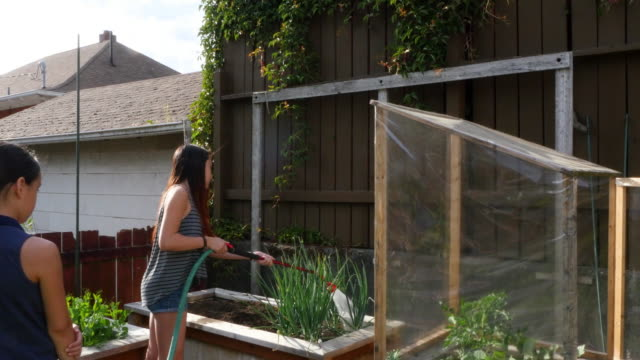 vídeos de stock, filmes e b-roll de ms younger sister helping older sister water garden in backyard of home on summer evening - short curto