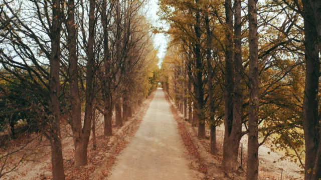 your path is yours to follow - pedestrian walkway stock videos & royalty-free footage