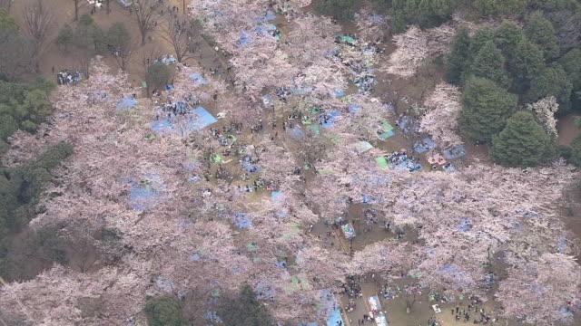 aerial, yoyogi park in spring, tokyo, japan - kanto region stock videos and b-roll footage