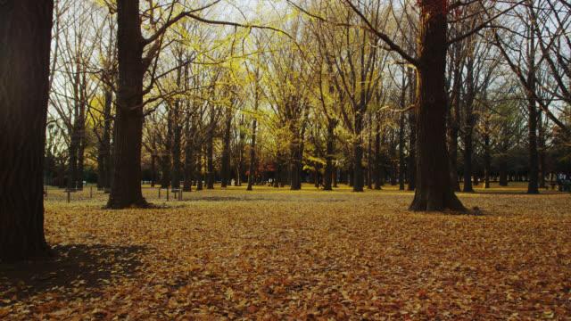 vidéos et rushes de yoyogi park - parc naturel