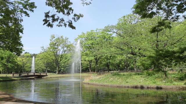 vídeos y material grabado en eventos de stock de yoyogi park - parque natural