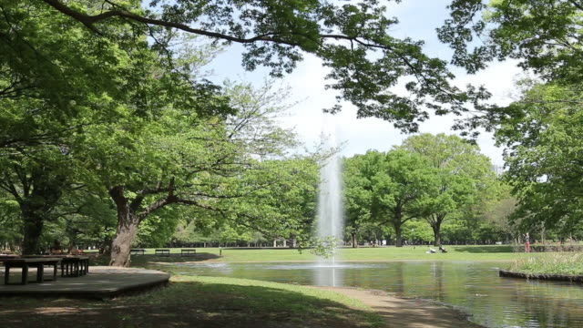 yoyogi park - natural parkland stock videos & royalty-free footage