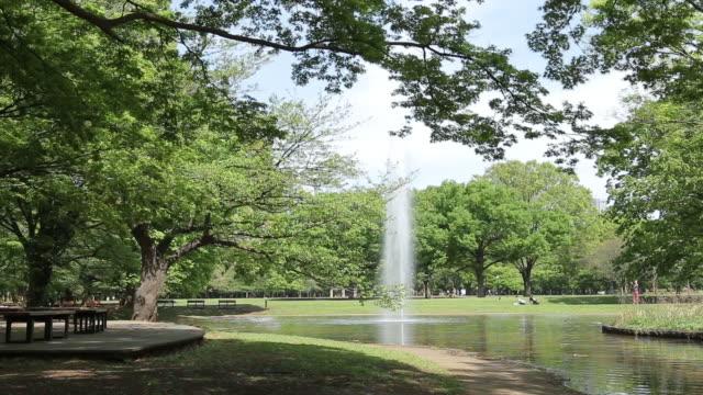 yoyogi park - geschützte naturlandschaft stock-videos und b-roll-filmmaterial