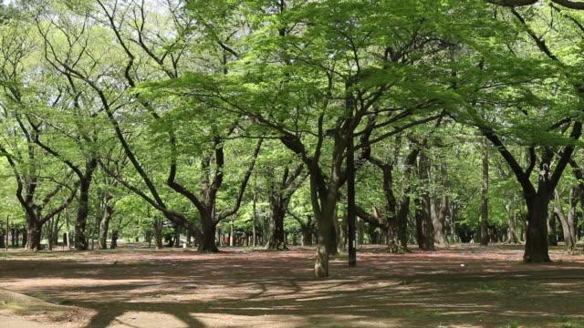 yoyogi park - 風致地区点の映像素材/bロール