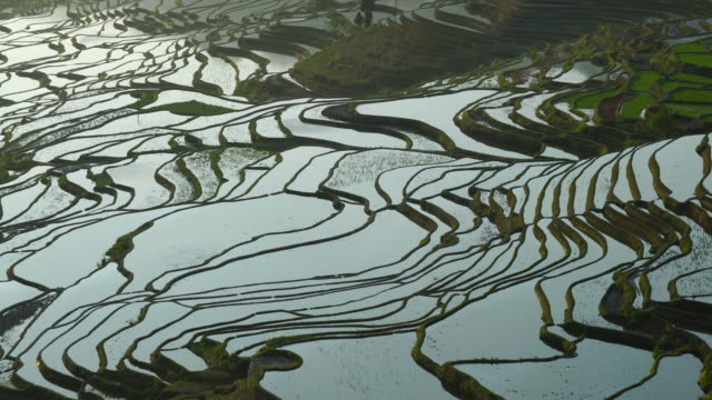 yuanyang rice-paddy terracing, yuanyang county, honghe han and hi autonomous prefecture, yunnan province, china, asia, unesco world heritage site - rice terrace stock videos and b-roll footage