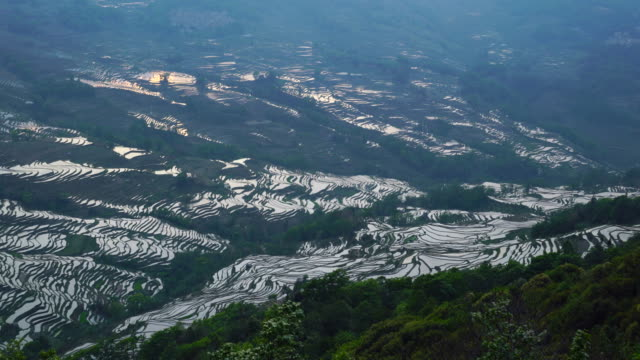 yuanyang rice-paddy terracing, yuanyang county, honghe han and hi autonomous prefecture, yunnan province, china, asia, unesco world heritage site - yunnan province stock videos and b-roll footage