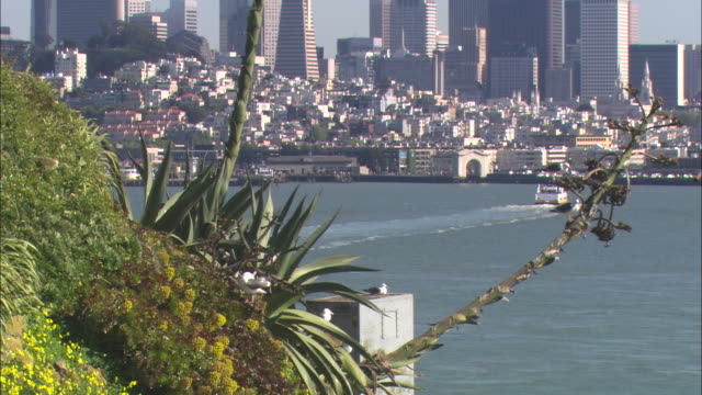 yucca grows on a hillside across the bay from san fransisco. - yucca stock videos & royalty-free footage