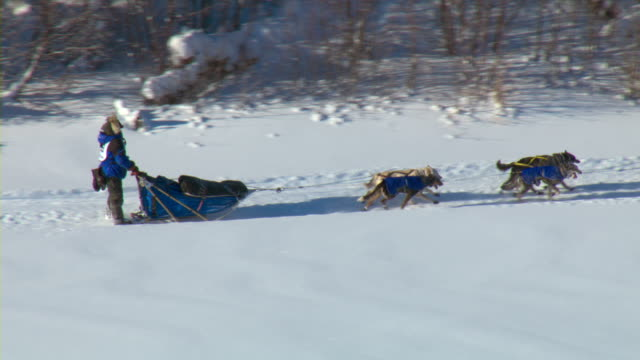 vidéos et rushes de a yukon quest dogsled team races through the canadian wilderness. - animaux au travail
