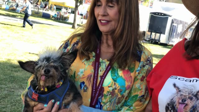 yvonne morones and her dog scamp the tramp before the start ofthe world's ugliest dog contest at the marinsonoma county fair on june 21 2019 in... - tramp stock videos & royalty-free footage