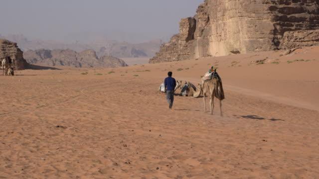zalabia bedouin boy leading his camels in wadi rum desert, jordan - gruppo medio di animali video stock e b–roll