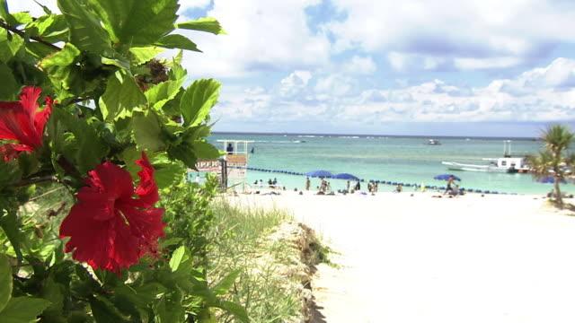zampa beach in yomitan, okinawa, japan - okinawa prefecture stock videos & royalty-free footage