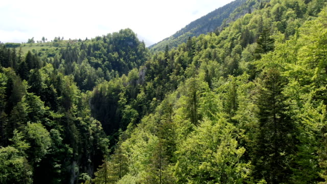 zarnesti gorge, piatra craiului national park ,carpathian mountains/ aerial drone view, romania - transylvania stock videos & royalty-free footage