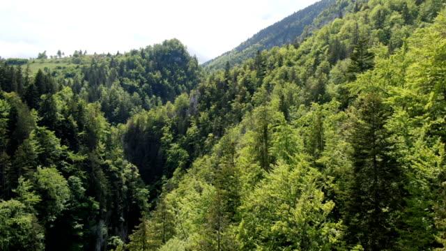 zarnesti gorge, piatra craiului national park ,carpathian mountains/ aerial drone view, romania - biodiversity stock videos & royalty-free footage