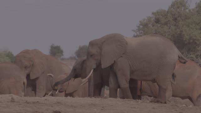 vidéos et rushes de zebra and herd of elephants / africa - plaque de montage fixe