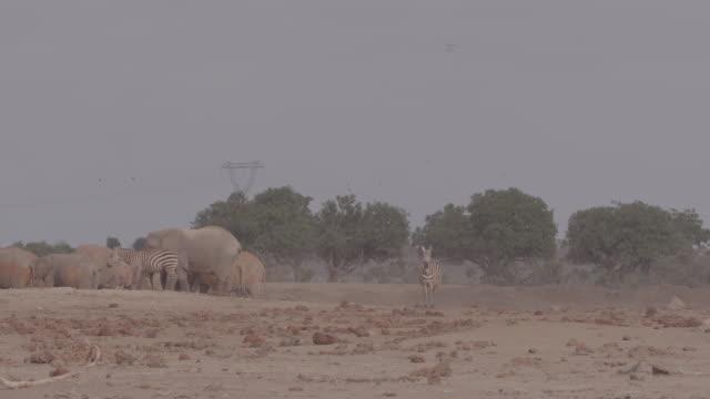 vidéos et rushes de zebra, antelope, herd of elephants / africa - plaque de montage fixe