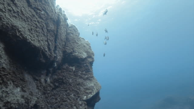 """zebra bream swimming near rocks in gran canaria, tenerife"" - グランカナリア点の映像素材/bロール"