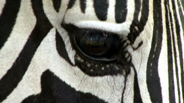 zebra faces - hluhluwe stock videos and b-roll footage