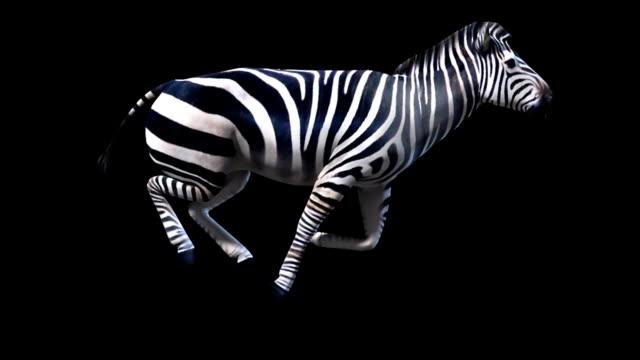 zebra laufen (endlos wiederholbar alpha-kanal ist im preis inbegriffen - zebra stock-videos und b-roll-filmmaterial
