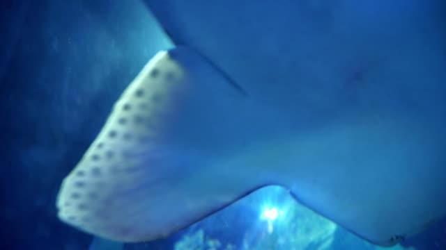 zebra shark - social issues stock videos & royalty-free footage