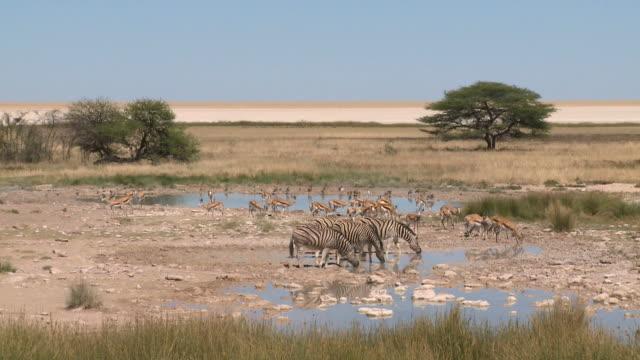 Zebras and Impalas at waterhole