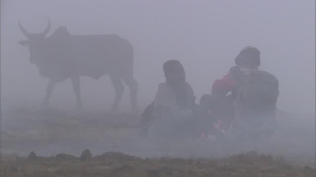 vídeos y material grabado en eventos de stock de zebu cattle and herders by burning dung fire in dawn mist, madagascar - oficio agrícola