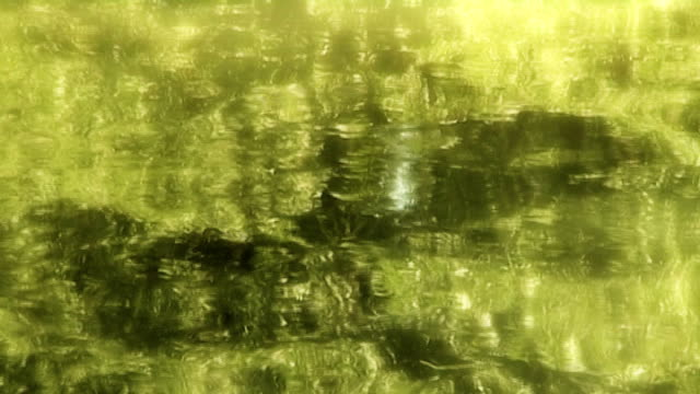 zen-like pond surface reflection (anamorphic dv) - aquatic plant stock videos & royalty-free footage