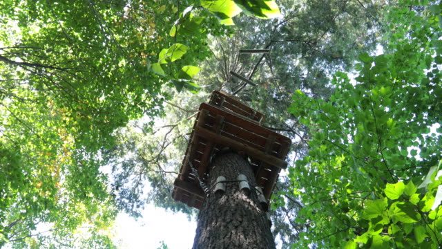 zip line and rope games adventure in forest - copertura di alberi video stock e b–roll