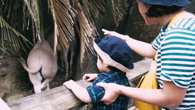 vidéos et rushes de zoo: bébé garçon et mère voyage - table de pique nique