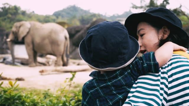 zoo: baby pojke och mor travel - djurpark bildbanksvideor och videomaterial från bakom kulisserna