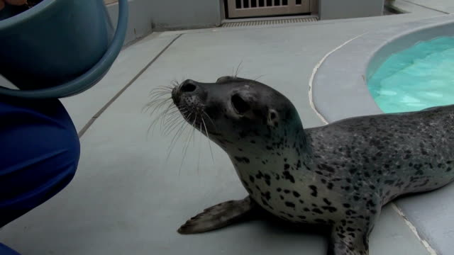 A zoo in Japan is publicly seeking the name of a baby harbor seal which was born in April and attracting visitors The Oga Aquarium in Akita...