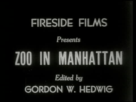 zoo in manhattan - 1 of 14 - central park zoo stock-videos und b-roll-filmmaterial