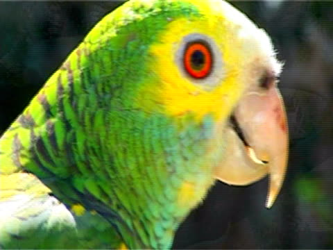 zoo, tropical bird, parrot macaw, nature wildlife - 2010 stock videos and b-roll footage