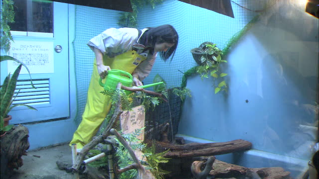 a zookeeper drips water on a dwarf caiman. - 動物園点の映像素材/bロール