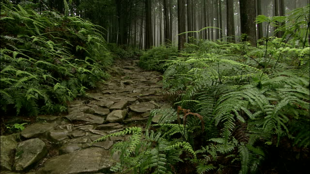 zoom along fern lined stone path (kumano kodo pilgrims road) to mist filled forest, wakayama, japan - single track stock videos and b-roll footage