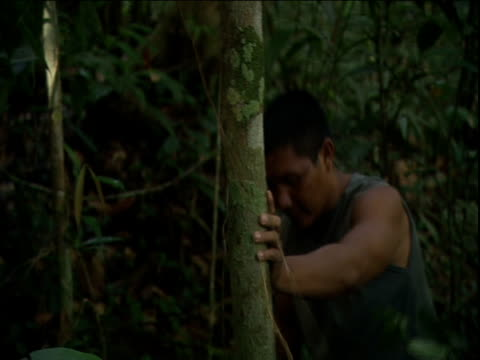 zoom in as man chops small tree in dense amazon rainforest venezuela - cut video transition stock videos & royalty-free footage