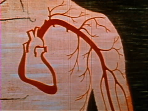 ANIMATION zoom in blood flowing through veins to beating heart