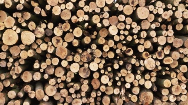 zoom in. close-up of a stack of wooden logs. harz mountains, harz, saxony-anhalt, germany. - wood texture stock videos and b-roll footage