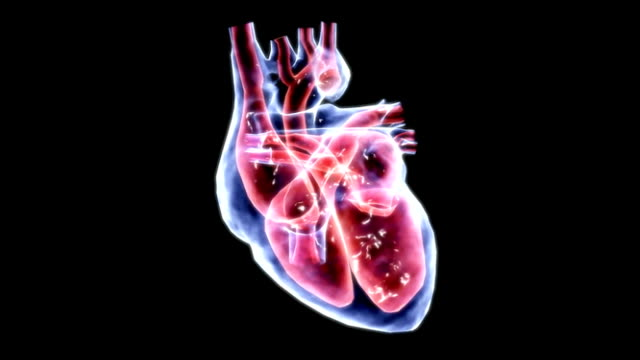 a zoom in on a beating heart which is in a stylized x-ray view. the inner chambers are colored red to emphasize their structure. - digital animation stock videos & royalty-free footage