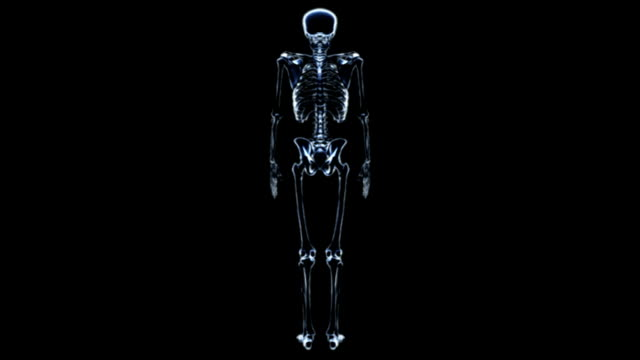 A zoom in on an anti-clockwise rotating skeleton in an X-ray view on a black background. All fades down except for the ribcage.