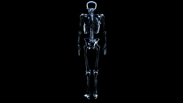 a zoom in on an anti-clockwise rotating skeleton in an x-ray view on a black background.  all fades down except for the spinal column and skull. - メディカルイラスト点の映像素材/bロール