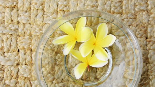 vídeos de stock e filmes b-roll de zoom in on bowl filled with yellow frangipani flowers - natureza morta