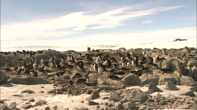 vídeos y material grabado en eventos de stock de zoom in on colony of penguins on rocky ground antarctic - colonia grupo de animales