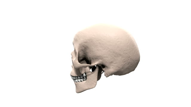 a zoom in on the skull which is rotating fully in a clockwise motion. - parietal bone stock videos & royalty-free footage