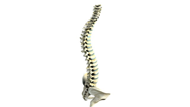 vídeos y material grabado en eventos de stock de a zoom in on the spinal column and pelvis, which is rotating in an anti-clockwise motion. all fades down except the atlas vertebra, which then pans from left to right. - pelvis