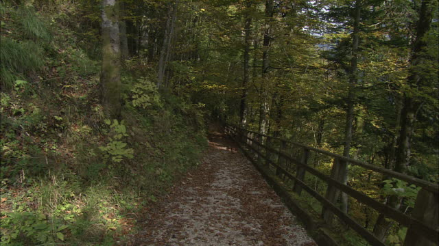 zoom in over autumnal leaves on mountain path, hallstatt - salzkammergut stock videos and b-roll footage