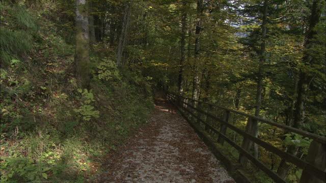 vídeos de stock e filmes b-roll de zoom in over autumnal leaves on mountain path, hallstatt - cultura austríaca
