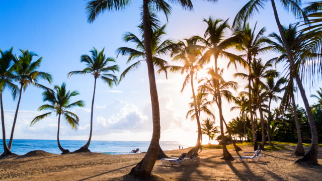 ws zoom in, sunset over tropical beach and palm trees at luxury resort - litorale video stock e b–roll