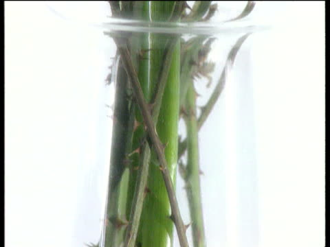 zoom in to rotating glass vase with lily tilt up stem surrounded by thorns to lily flower pierced with pins - とげのある点の映像素材/bロール