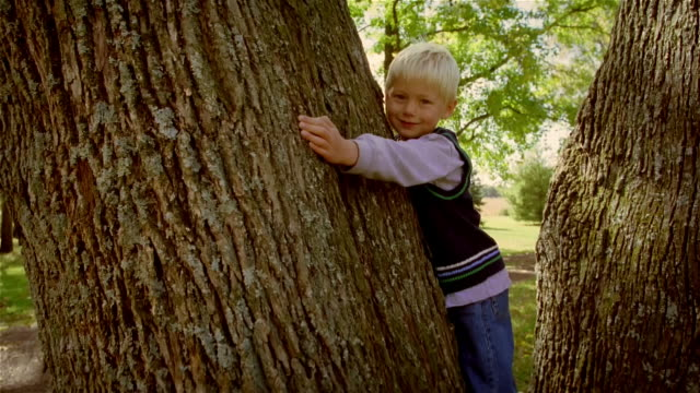 zoom in zoom out young blond boy hugging huge tree / smiling at camera - tree hugging stock videos & royalty-free footage